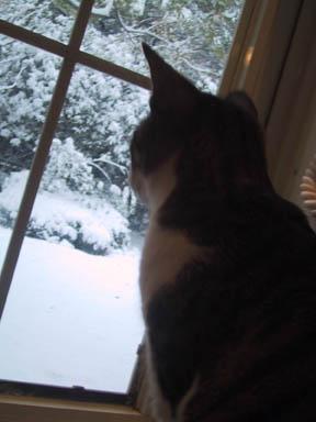 16 雪を眺めるツミレ.jpg