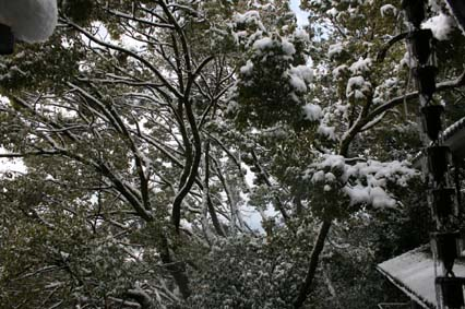 4 雪の日 瓜生山.jpg