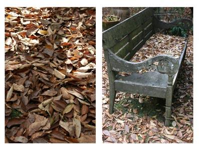 落葉の庭.jpg